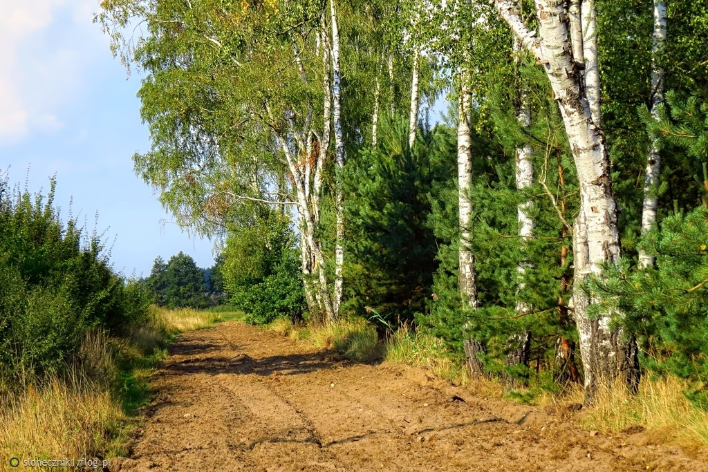 Polem, łąką, lasem ...