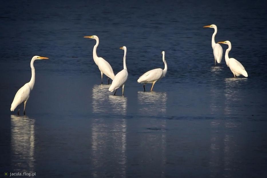 Białe damy z Jamnika wypatrują  Ani:):)