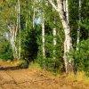 Polem, łąką, lasem ...  ::   Pogoda lasu niechaj będ<br />zie z tobą promień przeda<br />rty przez dwa liście dębu<br />szmer gałęzi, szme