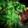 TarZanka :: Dziewczyna dżungli :) Lub<br />i takie klimaty - panterk<br />i (bluzka) ostre kolory (<br />włosy) - więc tylko kr
